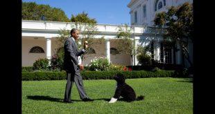 Barack Obama Reveals Death Of Family Dog 'Bo'